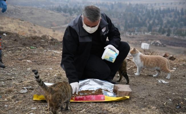 Kayseri İl Tarım ve Orman Müdürlüğü soğuk havalarda sokak hayvanlarını unutmadı