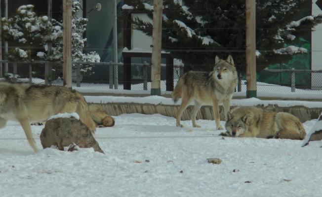 Anadolu Harikalar Diyarı Hayvanat Bahçesi her an açılacakmış gibi hazır