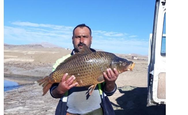 Baraj gölünde 150 santim uzunluğunda balık yakaladılar