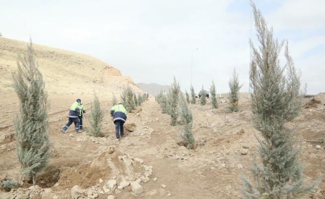 Erciyes yolunda ağaçlandırma çalışmaları başladı