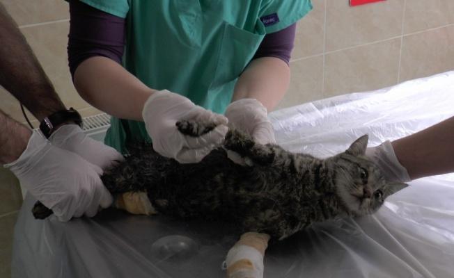 Pandemi döneminde evcil hayvana ilgi arttı