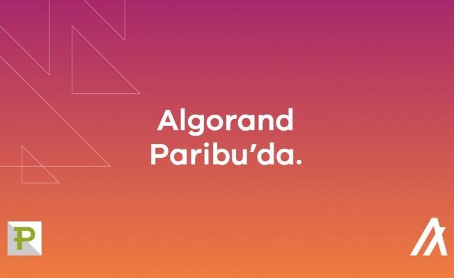 ALGO Coin Paribu borsasında...