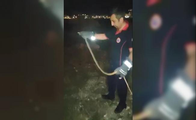 Araç içinde yakalanan yılan doğaya bırakıldı